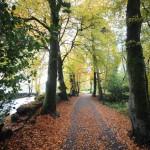 Autumn 1013 060